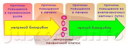 Схема 2. Все причины, по которых может быть билирубин повышенный, целесообразно делить на 4 группы