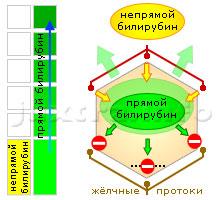Схема 1. Повышенный прямой билирубин. Причина — заболевания печени, нарушающие жёлчеобразование, а также выведение жёлчи на различных уровнях жёлчевыводящей системы