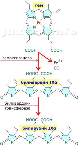 Гем - биливердин - билирубин
