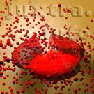 Разрушение эритроцитов приводит к высвобождению содержащегося внутри них гемоглобина