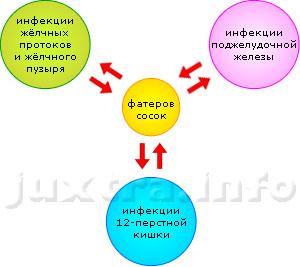Схема 3. Фатеров сосок: место встечи изменить нельзя. Сюда сходятся и отсюда расходятся инфекции тесно взаимосвязанных органов: жёлчного пузыря с протоками, поджелудочной железы и двенадцатиперсной кишки. Поэтому не бывает хронического холецистита без панкреатита и панкреатита без холецистита