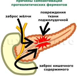 источники активации ферментов поджелудочной железы