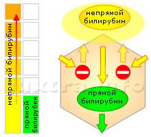 Схема 2. Повышенный непрямой билирубин. Причина — несостоятельность ферментных систем печёночных клеток